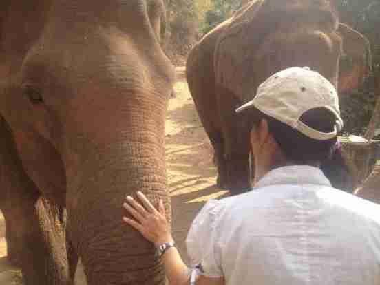 thailand_elephants