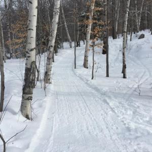 #6 Trail