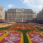 Briselski tepih od cvijeća