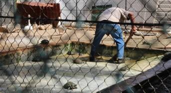 Pronta respuesta municipal al mini zoo de Mulsay
