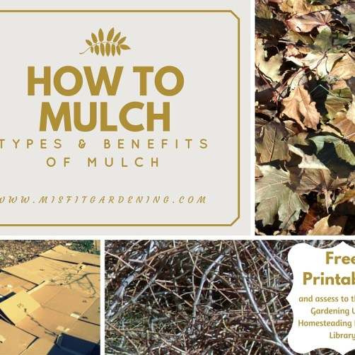 Types and benefits of mulching in the garden