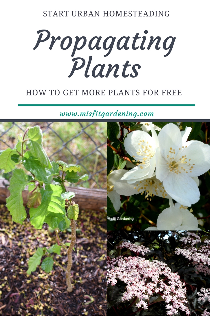 How to take cuttings