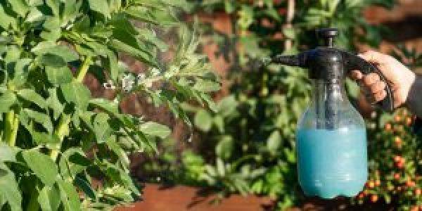 Πώς χρησιμοποιούμε τον χαλκό σε φυτά και καλλιέργειες