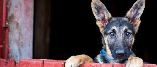 Medium Of Dog Rescue Videos