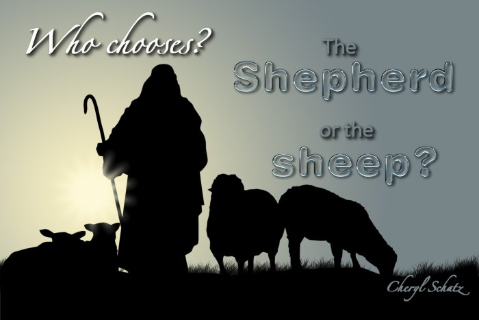 Who chooses? The Shepherd or the sheep? The Giving blog by Cheryl Schatz