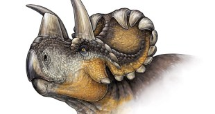horned-dinosaur-discovered