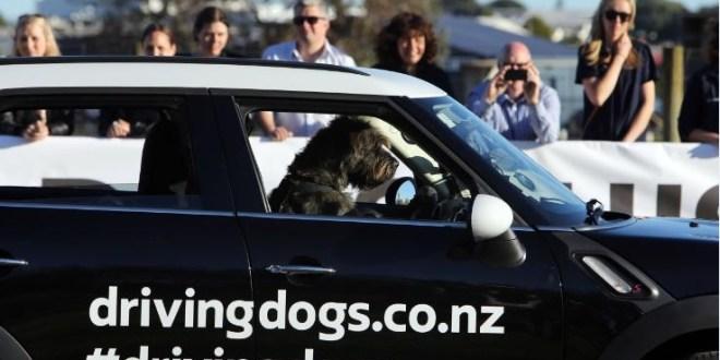 spcadrivingdogs-1