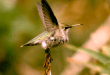 bird-flight-mobilemag