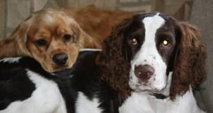 blind-dog-kellar