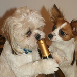 33 Dogs That Booze Harder Than You Do