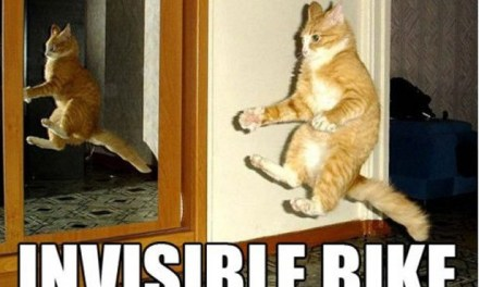 12 Incredible Cat Memes That Are Guaranteed To Boost Your Mood