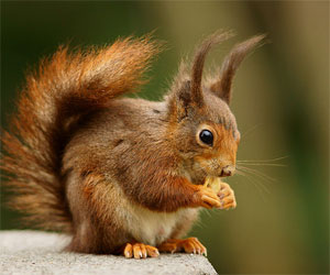 Funky Squirrel