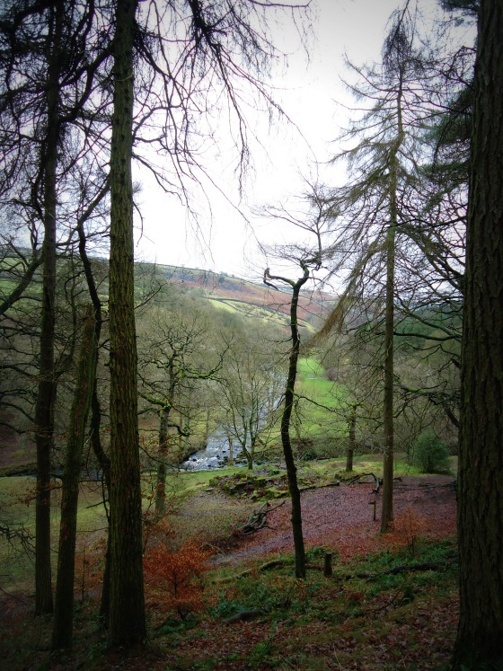 modflowers: scenery near Gradbach Mill