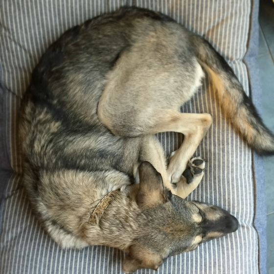 modflowers: a dog never lies about love