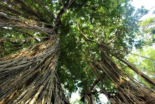 bali-monkey-forest-3