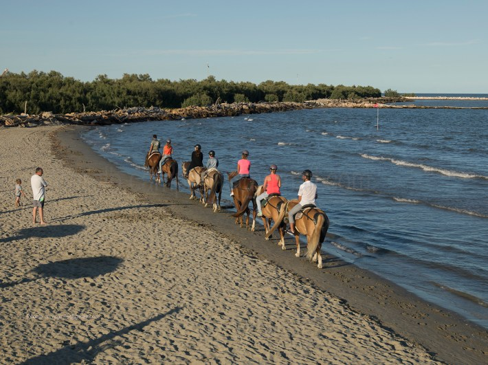 Horses, Bonelli di Porto Tolle, Polesine, Veneto, Italy, Europe