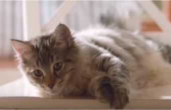 Come Vivere con un Gatto
