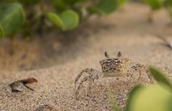 Avventure al mare: catturare un granchio