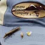 Dry Fly Action is Heating Up in the Montana Fishing Company Fly Fishing Report