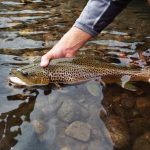 "Good Dry Fly Fishing in the Western Montana ""John Perry"" Fishing Report: 7/2/2012"