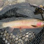 Top 5 Fly Fishing Rivers In Montana During July