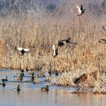 Give a Little to Big Horn Chapter of Ducks Unlimited