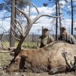Huge Bull Elk Hunting Montana