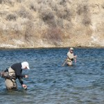 Bighorn Brown Trout Boom: Brett French Radio Show Preview