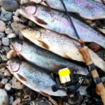 Montana Grant's Weekly Fishing Report – 4.8.13