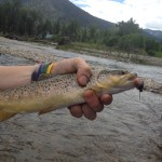 Top 5 Places to Catch Fish On Dry Flies This Weekend: Fishing Report 6/12/2012