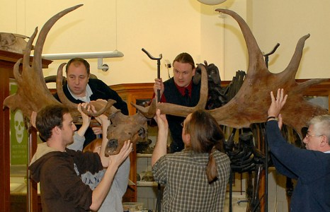 irish_elk_moves_lrg
