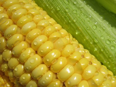 your_best_fresh_corn_dishes