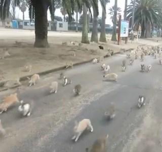 rabbitisland