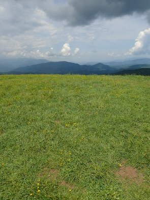 Max Patch Overlook - 05.31.2016 - 11.03.40