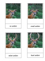 Three part cards Deer Antlers Cycle
