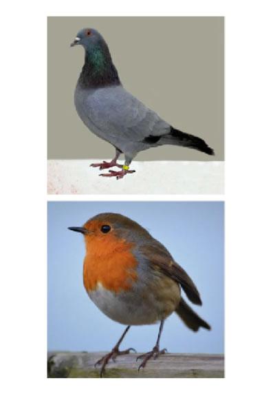 British bird photos 2 a page