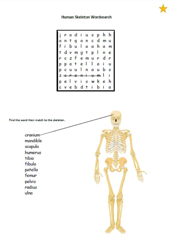 Human skeleton wordsearch