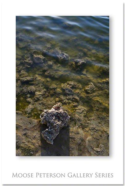 Mono Lake 5444