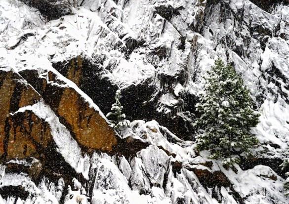 Keystone Rock Tree