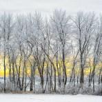 Hoar Frost Heaven