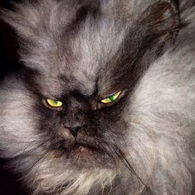 angry-fur-cat