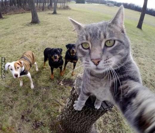 The-last-selfie