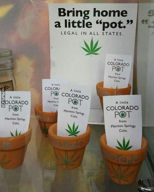 little-pot