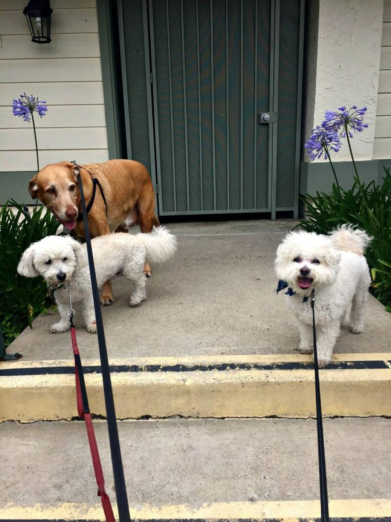 buddy and his friends