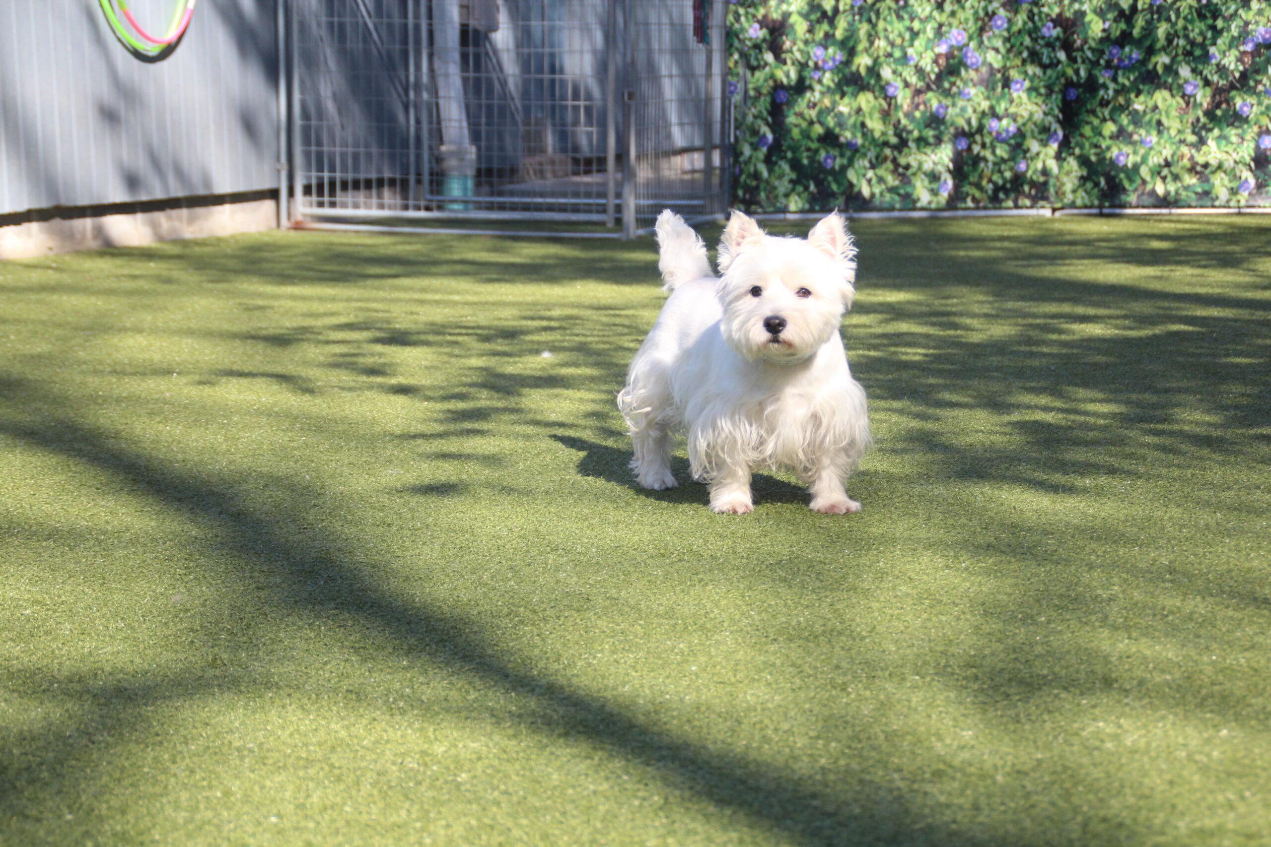 Fullsize Of White Dog Breeds