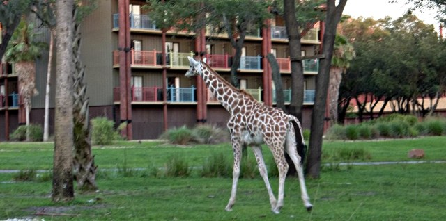 You can view the animals from your balcony or any of the outdoor viewing areas for an up close and personal experience.