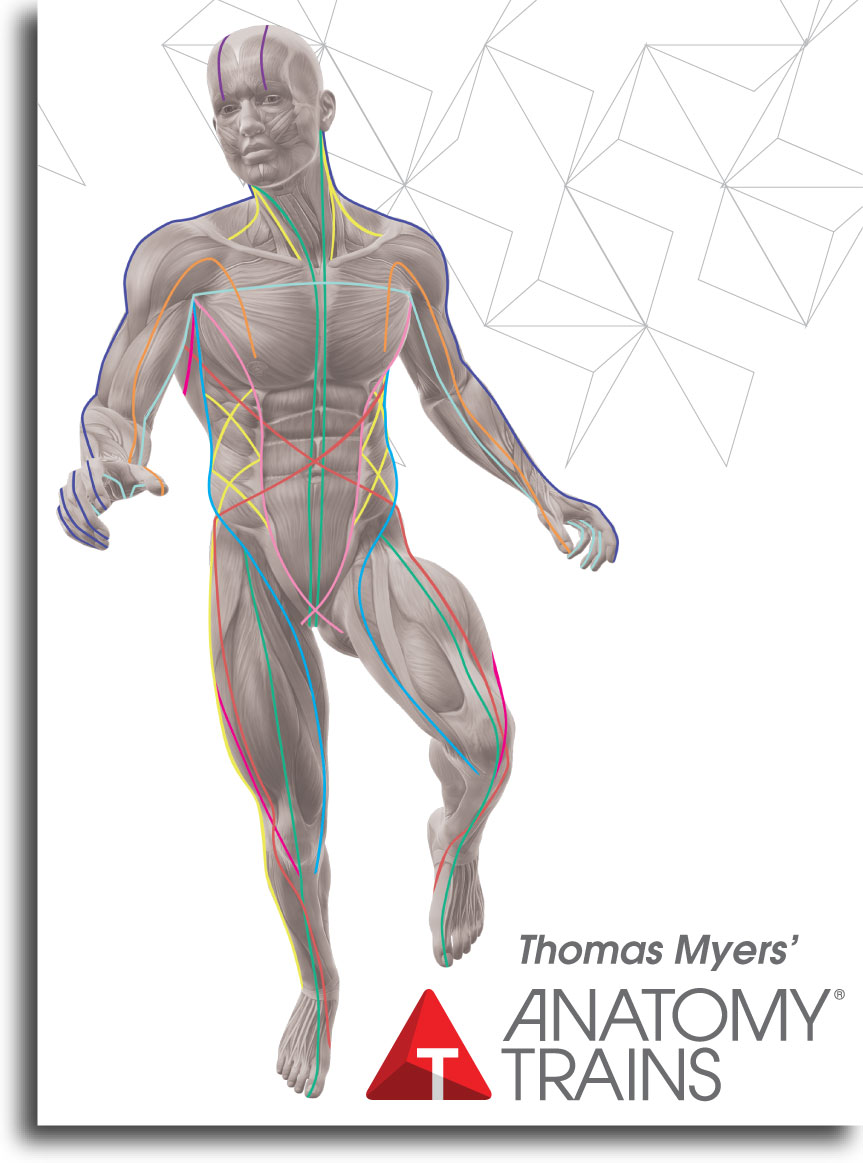 Nov 2014 Anatomy Trains Workshop Fascial Training Movement