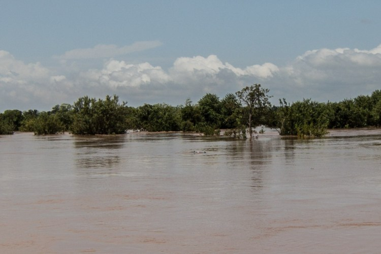 湄公河江豚