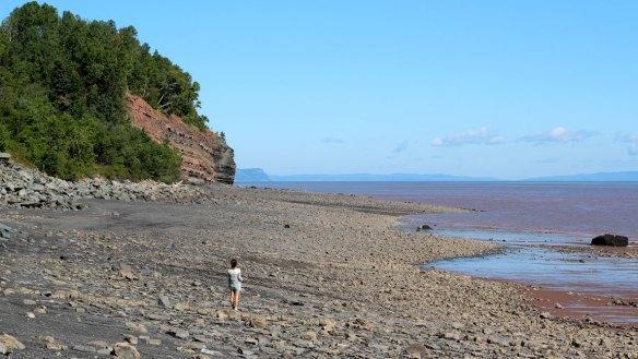 Blue_Beach_Fossil_Hunting