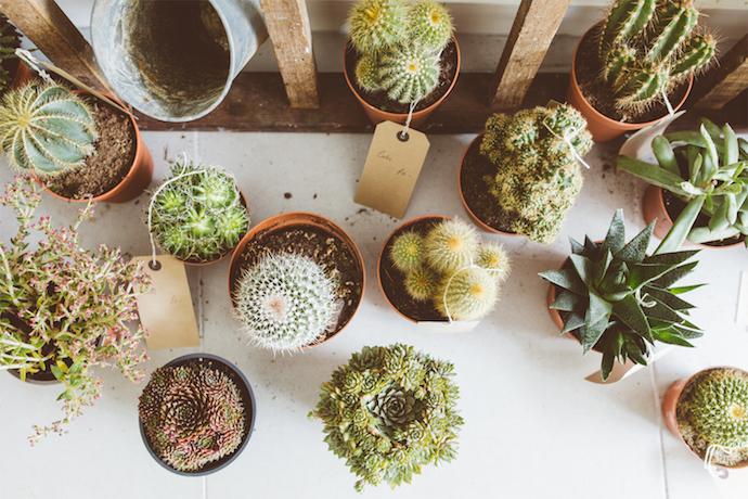 Cactus Display